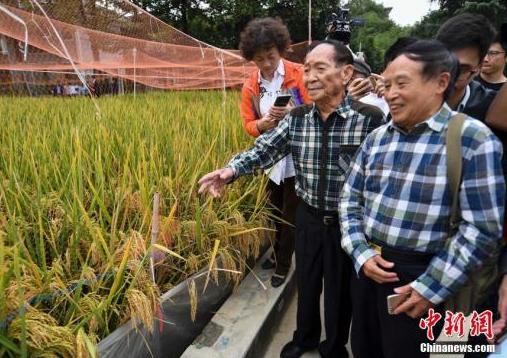 袁隆平团队又有好消息_长江中游双季稻亩产1365公斤